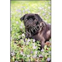 Quality Pug Blk Flag (Garden) for sale