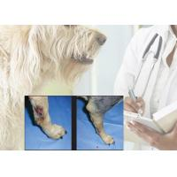 Quality 15 W Laser Canine Rehabilitation Equipment , Laser Therapy For Arthritis In Dogs for sale