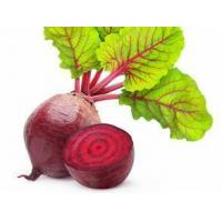 China English  Beet Root Juice Powder on sale