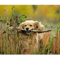 Quality 5B74 I`ve got a stick, a natural picture of man`s best friend. (for 6 cards) for sale