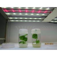 Quality Plant Grow LED Light for sale