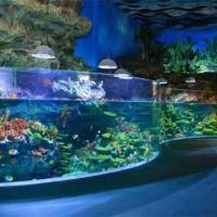 Quality Curved Acrylic Fish Tank for sale