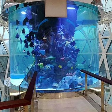Buy Fish Culture Acrylic Cylinder at wholesale prices
