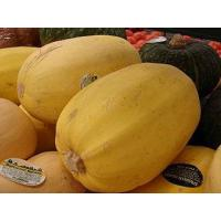 Buy cheap Spaghetti squash from wholesalers